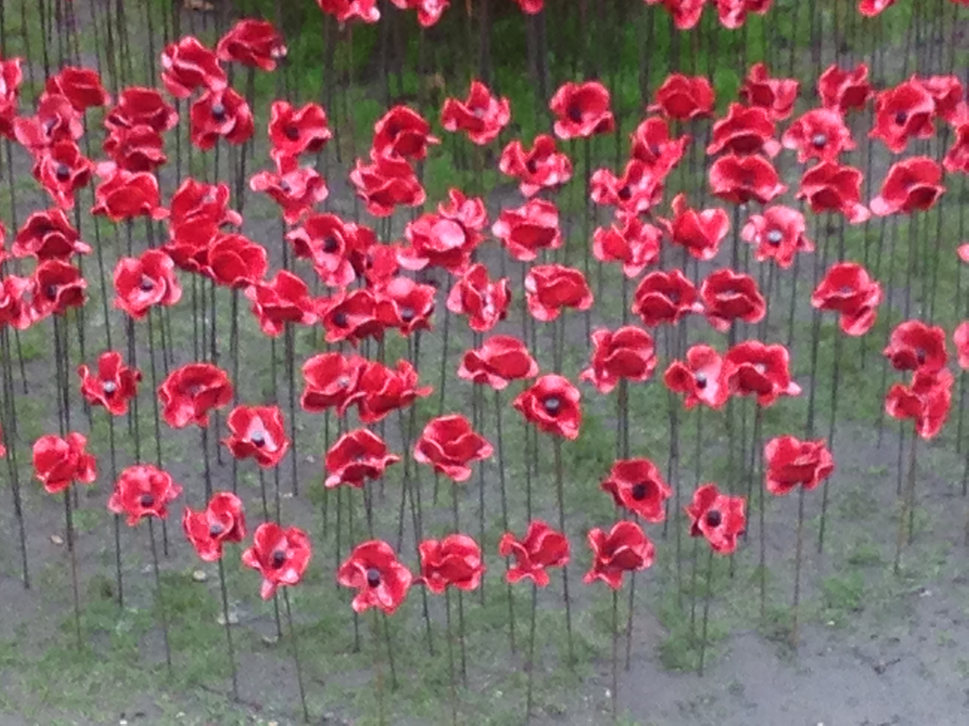 poppies for our children notjustthe3ofus