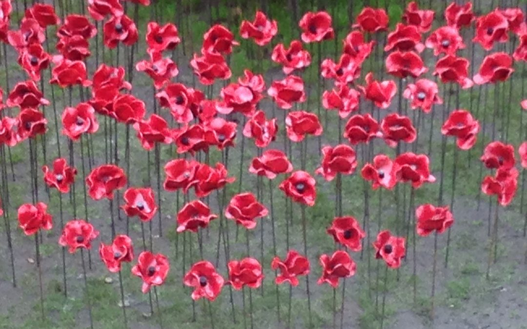 Poppies For Our Children