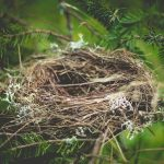 September : A Full & Empty Nest