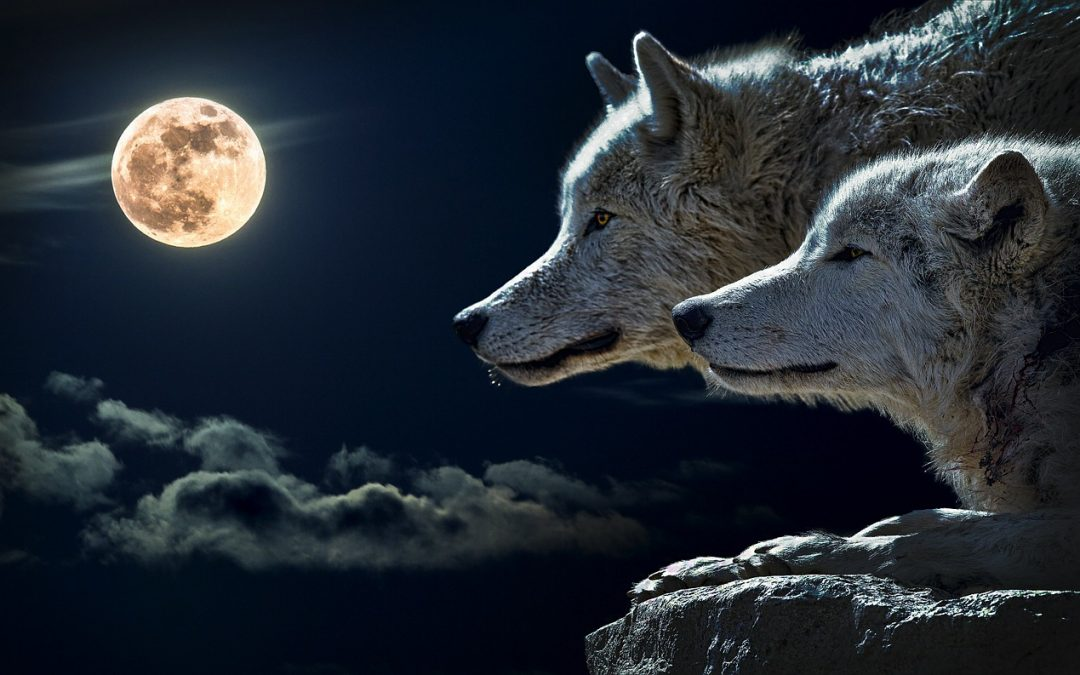 Why Does the Full Moon Play Havoc with My Sleep?