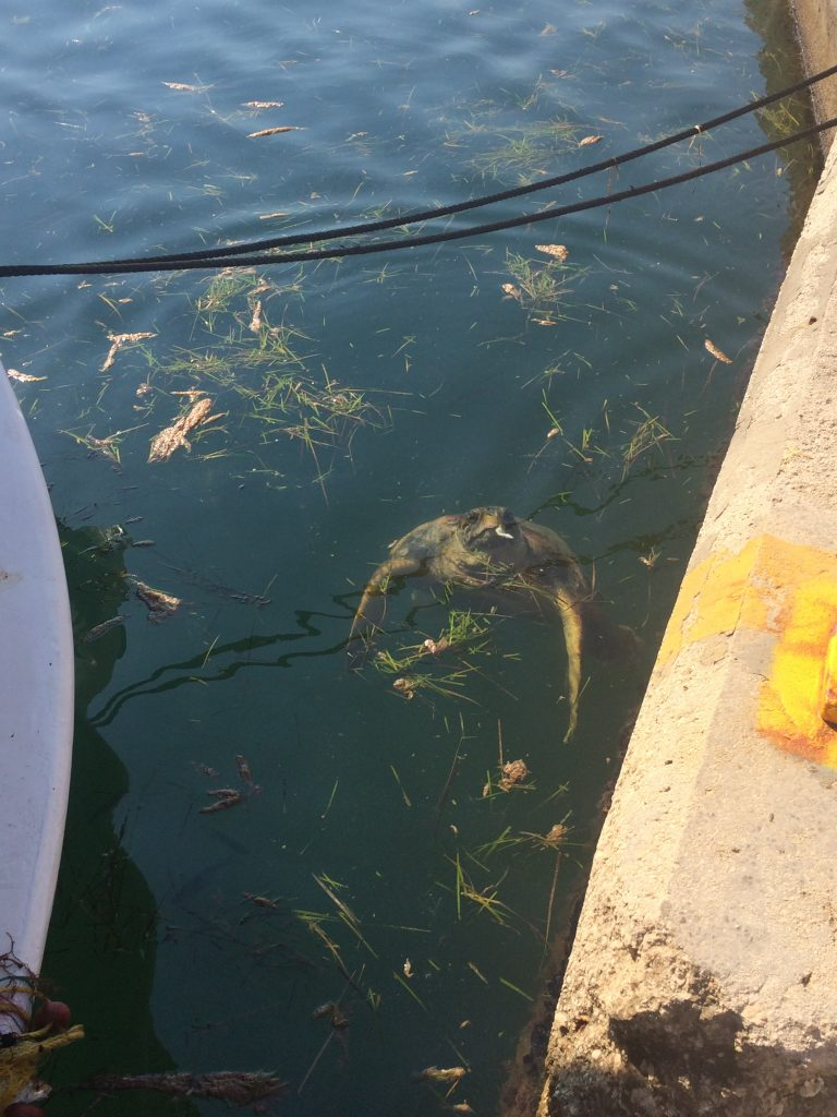 Argostoli Turtles